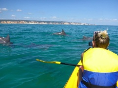 Noosa Dolphin View Sea Kayaking Tour