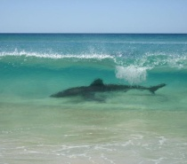 pelican 4wd bookings-Fraser Island